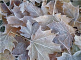 Keep Leaves of Panels and Fixtures, Especially Those with Halogen Bulbs
