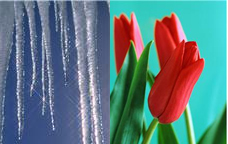 which_spring_do_you_have