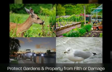 deer eatng plants and garden, seaguls fouling waterfront area