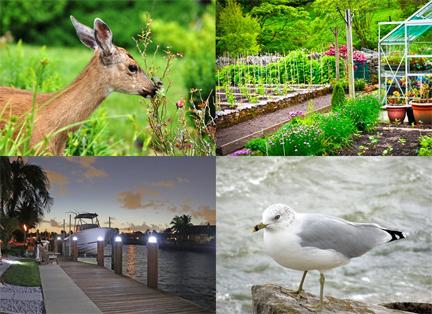 Deer eating gardens, seagull near expensive boat
