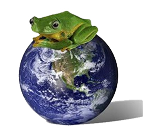 frog sitting on a clean earth
